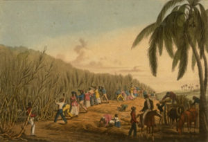 Enslaved Africans cutting cane